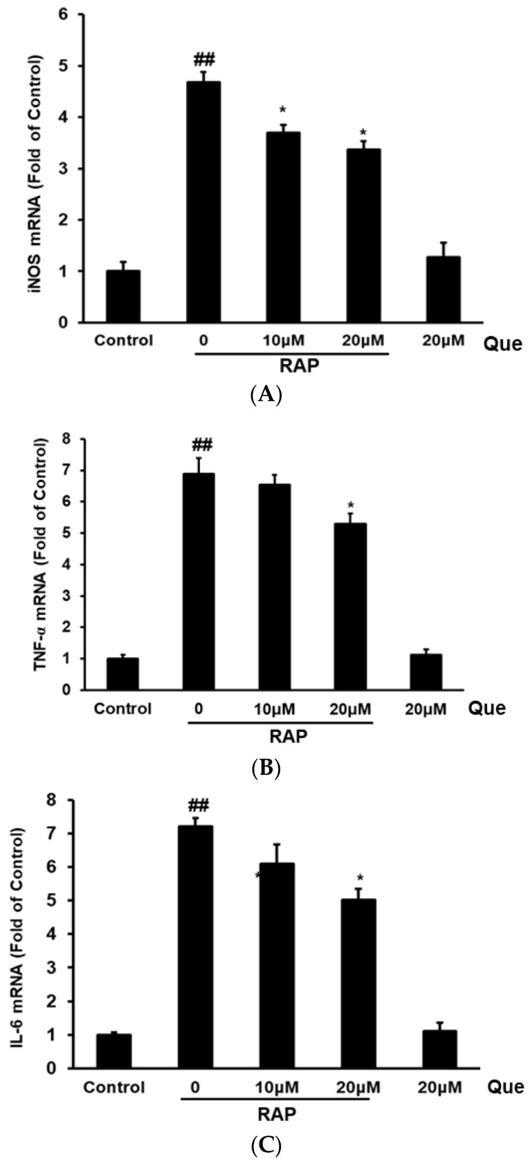 Effects of quercetin on inducible nitric oxide synthase (iNOS) ( A ), TNF-α ( B ) and IL-6 ( C ) mRNA expression in RAP-induced RAW264.7 macrophages. RAW264.7 cells were treated with quercetin (10, 20 μM) and then treated with RAP (100 μg/mL). The mRNA expression level was quantified with real time fluorescence PCR. Data from the experiments are expressed as mean ± SD (## p