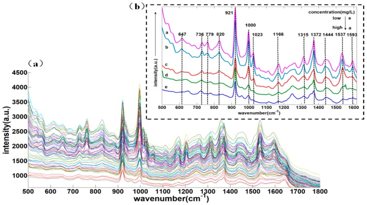 ( a ) 500–1800 cm −1 SERS spectra of different concentrations of deltamethrin in strawberry; ( b ) the SERS spectra of five concentrations of deltamethrin in strawberry.