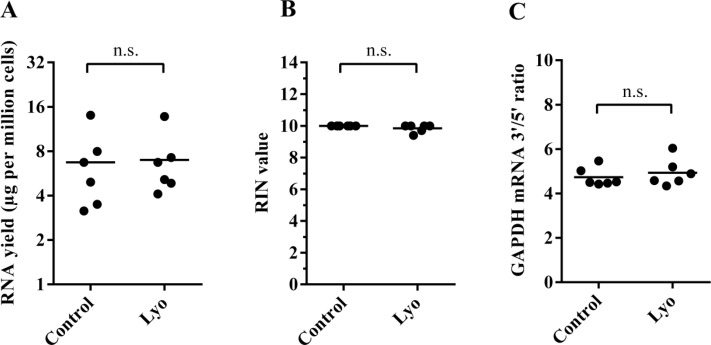 Quantity and quality of RNA isolated from paired control and lyophilized cells (immediately after lyophilization) ( A ) RNA yield per million cells. Horizontal lines represent mean values ( P = 0.68, paired t -test) ( B ) Calculated RIN values of paired samples; horizontal lines indicate mean values ( P = 0.15, paired t -test). ( C ) The GAPDH mRNA 3′/5′ ratio of paired samples ( P = 0.34, paired t -test).