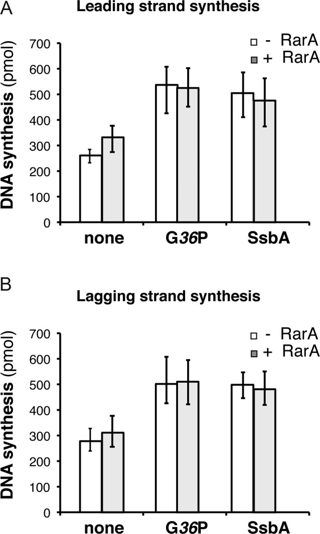 RarA does not inhibit SPP1 DNA replication. Quantification of leading ( A ) and lagging ( B ) strand synthesis obtained in standard SPP1 rolling circle DNA replication assays in the absence or in the presence of 100 nM RarA. Reaction mixes contained the SPP1 replisome, which is composed by SPP1 preprimosomal proteins (G 38 P and G 39 P) and DNA helicase G 40 P, and host proteins (DnaG, τ-complex, β, PolC and DnaE). The SPP1 replisome works with both SSB proteins (SsbA or G 36 P) and the effect of RarA on reactions having either viral G 36 P or host SbsA was tested. An enzyme mix consisting of all proteins except the SSB was generated, and added to a substrate mix composed of template DNA, rNTPs, dNTPs, and the indicated SSB (none, 30 nM G 36 P, or, 90 nM SsbA). Then reactions were placed at 37°C and incubated for 10 min. Leading strand synthesis was quantified by [α- 32 P]-dCTP incorporation and lagging strand synthesis by [α- 32 P]-dGTP incorporation. The results are expressed as the mean ± SEM of > 3 independent experiments.