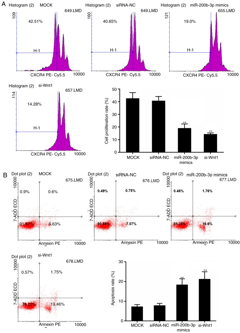 Effect of miR-200b-3p on the proliferation and <t>apoptosis</t> of CRC cells. (A) CFSE assay for cell proliferation. (B) Flow cytometric analysis for apoptosis. **P