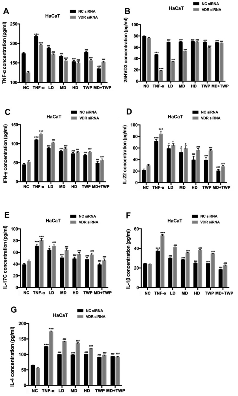 Silencing VDR decreases TNF-α, IFN-γ, IL-22, IL-17C, IL-1β and IL-4 expression levels, and increases the 25HVD3 expression level in TNF-α-induced HaCaT cells with stably silenced VDR. The concentrations of (A) TNF-α, (B) 25HVD3, (C) IFN-γ, (D) IL-22, (E) IL-17C, (F) IL-1β and (G) IL-4 were detected by ELISA. ***P