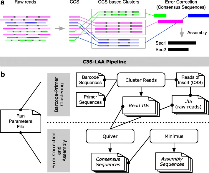 Graphical representation of the C3S-LAA process and pipeline. a Raw reads comprised of multiple subreads are depicted for three different amplicons [green, fuchsia and blue boxes; different shades of color are used to portray variable subread sequence qualities (darker shading portrays higher quality)]. Subreads are separated by a shared adapter sequence (grey boxes). The higher quality CCS read for each raw read is used to cluster the corresponding raw reads into CCS-based cluster groups. Error correction is performed per CCS-based cluster, producing top quality consequences sequences, followed by assembly of any overlapping consensus sequences. b A single run parameters file is used by all components of the pipeline. The grey highlighted rectangles represent two main steps of C3S-LAA. (i) Using the CCS reads generated by the SMRT analysis reads of insert protocol, C3S clusters the raw reads according to each barcode-primer pair combination, producing files of read identifiers to whitelist the corresponding raw reads. (ii) Raw read clusters are passed to Quiver to generate amplicon-specific consensus sequences, which are then passed to Minimus for sequence assembly. Rectangles with folded corners represent single files or multiple files (depicted as stacks of files) and those with rounded edges represent scripts and tools. Arrows indicates output files that are generated. Connecting lines with dots at one end depict input files, with the dot corresponding to the source data for the connected script or tool