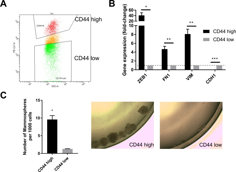 CD44 status serves as a marker for the mesenchymal and stem-like cell state in human mammary epithelial cells. ( A ) HMLER cells were stained with CD44-PE-CY7 antibody. CD44 high and low cell populations were sorted by flow cytometry. The gating for CD44 high and low cells is shown. ( B ) qPCR analysis of the expression of mesenchymal ( ZEB1 , FN1 and VIM ) and epithelial ( CDH1 ) markers in CD44 high and low HMLER cells. n = 4. *, p