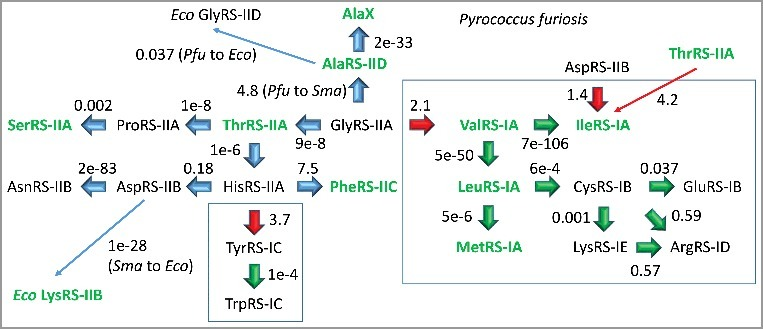Pyrococcus furiosis ( Pfu ) aaRS enzymes were searched using NCBI Blast tools for nearest homologs in Pfu . In some cases, Staphylothermus marinus ( Sma ) (archaea) and Escherichia coli ( Eco ) (bacteria) homologs are identified. AlaX is one of a set of tRNA Ala editing enzymes in Pfu .