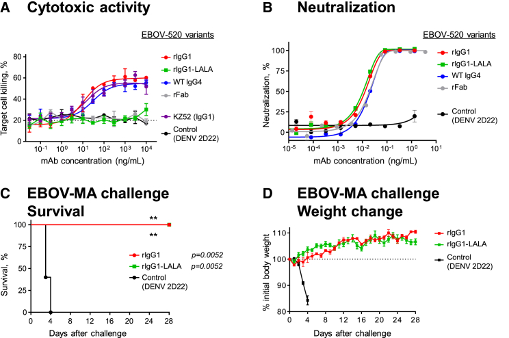 EBOV-520 Possesses Fc Region Effector Function Activity but Mediates Protection Principally through Virus Neutralization (A) In vitro killing capacity curves for engineered variants of mAb EBOV-520 that determined using SNAP-tagged EBOV GP-expressing 293F cell line as a target and human PBMCs as source of effector cells. Dotted line indicates assay background. (B) Neutralization of EBOV by engineered <t>IgG</t> heavy chain variants of mAb EBOV-520. (C and D) In vivo protective efficacy of EBOV-520 rIgG1 or rIgG1-LALA against EBOV. C57BL/6 mice were challenged with EBOV-MA, treated with indicated mAb in 1 dpi, and monitored for 28 days. Mean ± SD of triplicates are shown, and data are representative of two independent experiments in (A) and (B). Mean ± SEM are shown, and data represent one experiment with five mice per group in (C) and (D). ∗∗ p
