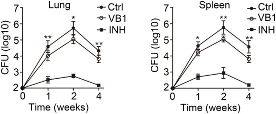 The anti-bacillus effect of vitamin B1 (VB1) in mice with Mycobacterium tuberculosis infection. C57BL/6J mice were infected with H37Rv (~200 bacteria/mouse). Oral administration with water (Ctrl), VB1, and INH ( n = 15 mice/group) was started from the day after infection (day 1) and continued for 1, 2, and 4 weeks alternatively. The lungs and spleens were analyzed at indicated time. Colony-forming units (CFUs) were obtained from the lung and spleen cell lysates by serial dilution and plating on 7H10 agars in triplicate. The colonies were counted after 4 weeks. Data shown are the mean ± SD. * P