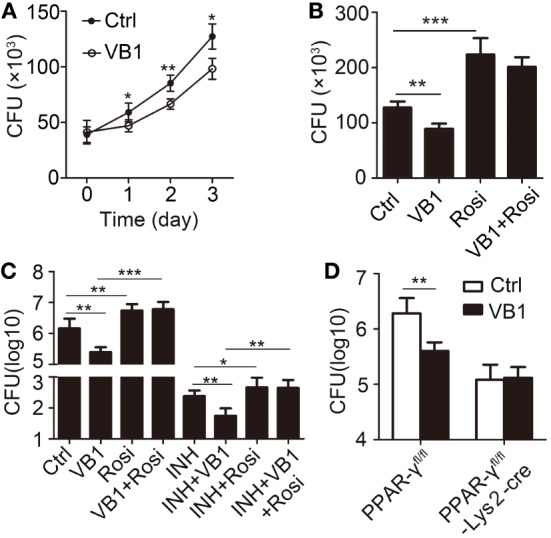 The anti-bacillus effect of vitamin B1 (VB1) in macrophages. (A,B) Bone marrow-derived macrophages were pretreated with phosphate buffer saline, VB1, Rosi, or mixture of VB1 and Rosi for 24 h and then challenged with Mycobacterium tuberculosis H37Rv (MOI 5) for 1 h. (A) Intracellular viable bacteria were detected with colony-forming unit (CFU) assays at 0, 1, 2, 3 day post-infection. (B) Intracellular viable bacteria were detected with CFU assays at 72 h post-infection. (C,D) PPAR-γ fl/fl or PPAR-γ fl/fl -Lys2-cre mice were infected with H37Rv (~200 bacteria/mouse). Oral administration with water (Ctrl), VB1, INH, or Rosi ( n = 5 mice/group) was started from the day after infection (day 1) and continued for 2 weeks. CFUs were obtained from the lung cell lysates by serial dilution and plating on 7H10 agars in triplicate. The colonies were counted after 4 weeks. (C) C57BL/6J mice. (D) PPAR-γ fl/fl or PPAR-γ fl/fl -Lys2-cre mice. Data shown are the mean ± SD. * P