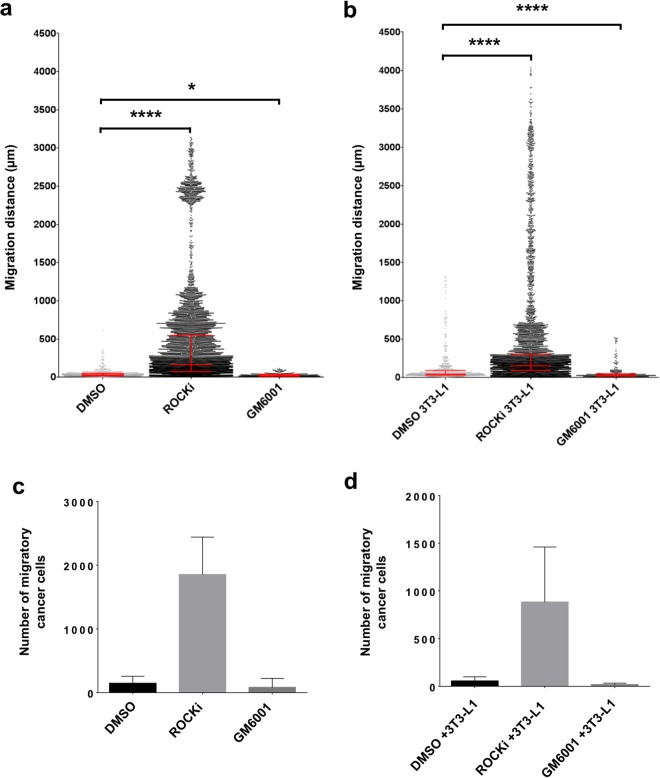 Analysis of tumour cell migration and response to pathway inhibitors (10 days). Comparison of Wnt1 tumour cell migratory distance, from the anisotropic collagen scaffold nucleation point to within the scaffold, after 72 hours culture in the absence ( a ) or presence ( b ) of differentiated 3T3-L1 cells (known as ET-SIM), with/without pathway inhibitors ROCKi, GM6001 and Canertinib, all statistically compared to DMSO (vehicle control). The total number of migratory Wnt1 tumour cells within the scaffolds, in the absence ( c ) or presence ( d ) of differentiated 3T3-L1 cells (known as ET-SIM), with/without the pathway inhibitors ROCKi, GM6001 and Canertinib compared to DMSO (vehicle control). The following statistical analyses were applied: non-parametric unpaired/matching Kruskal-Wallis ANOVA with a Geisser-greenhouse correction combined with a Dunn's multiple comparison test, *p
