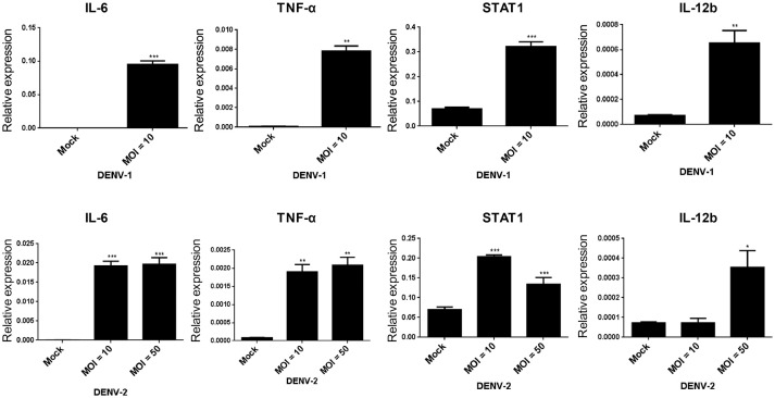 DENV-1 and−2 induce interleukin 6 (IL-6), tumor necrosis factor-alpha (TNF-α), signal transducer, and activator of transcription 1 (STAT1), and IL-12b gene expression in HFDPCs. RT-qPCR of IL-6, TNF-α, STAT1, and IL-12b expression in HFDPCs infected with DENV-1 (MOI = 10) and DENV-2 (MOI = 10 and 50) for 4 days. The gene expression was normalized to GAPDH gene. Data are mean ± SD from three independent tests, * P