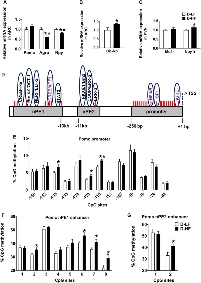 Gene expression and hypothalamic Pomc <t>DNA</t> methylation changes in offspring at weaning. a mRNA expression levels of Pomc , Agrp , Npy , and b Ob-Rb in the <t>ARC.</t> c Relative mRNA levels of Mc4r and Npy1r in the PVN analyzed by qRT-PCR in the 3-week-old offspring of LF- or HF-fed dams (Student's t -test, n = 8). d Map of the Pro-opiomelanocortin ( Pomc ) gene promoter and enhancer region including functional regulatory elements and CpG dinucleotides (red lines). e Methylation analyzes of hypothalamic Pomc promoter (− 150 bp to transcription start site [TSS]) (Student's t -test, D-LF, n = 6; D-HF, n = 7) and f , g of neuronal Pomc enhancer region 1 and 2 in the offspring of LF- or HF-fed mothers at 3 weeks of age (Student's t -test, n = 8). Data are shown as mean ± SEM. * p