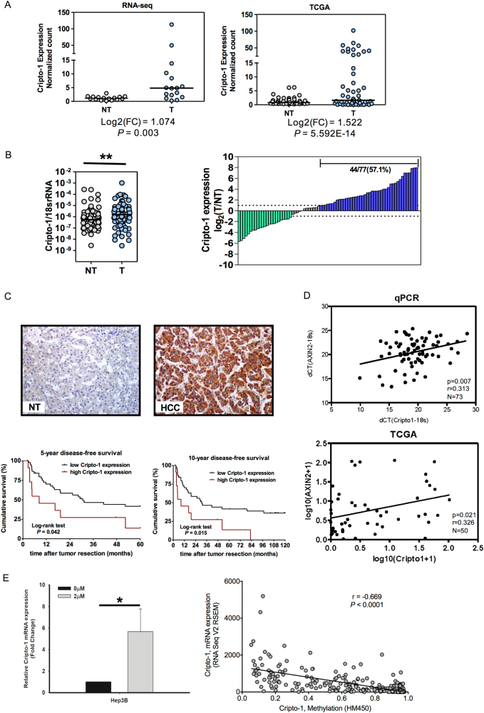 Cripto-1 levels in HCC clinical samples carry prognostic significance and are correlated with AXIN2 expressions. a Cripto-1 was significantly upregulated in HCC tumor tissues (T) versus the corresponding non-tumorous liver tissues (NT) from both in-house RNA sequencing dataset ( n = 16) and the TCGA database ( n = 50). b Cripto-1 level was significantly upregulated in HCC tumor (T) versus non-tumorous liver (NT) tissues by qRT-PCR ( n = 77, ** p