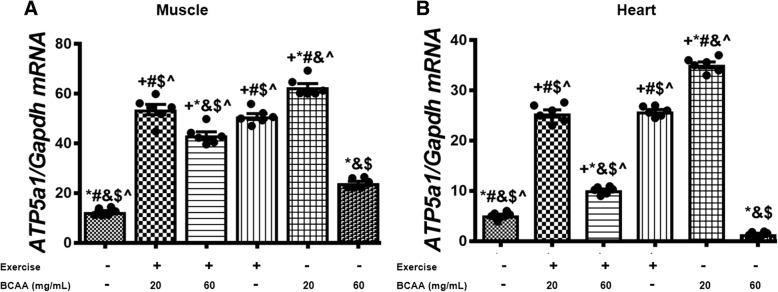 Variation in expression level of ATP5b in muscle and heart tissues of exercised and BCAAs supplemented mice. qRT-PCR on cDNA samples of gastrocnemius muscle ( a ) and heart ( b ) tissues derived from exercised and BCAAs supplemented mice indicated a significant increase of ATP5b transcript level in 20BCAA group ( p