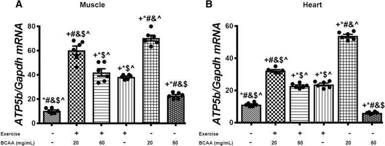 Expression levels of Pgc-1α was increased in heart and muscle tissues of exercised and 20 mg/mL BCAAs (20BCAA/Ex) supplemented mice. qRT-PCR on cDNA samples of gastrocnemius muscle ( a ) and heart ( b ) tissues derived from exercised and BCAA supplemented mice indicated most increase of Pgc-1α transcript level in 20BCAA group (p