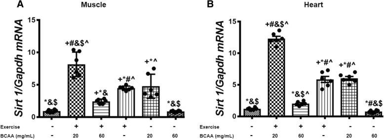 Modulation in relative expression level of Sirt1 in gastrocnemius and heart muscles of exercised and BCAAs supplemented mice. qRT-PCR on cDNA samples of gastrocnemius muscle ( a ) and heart ( b ) tissues derived from exercised and 20 mg/mL BCAAs supplemented mice (20BCAA/Ex) indicated a significant increase of Sirt1 transcript level ( p