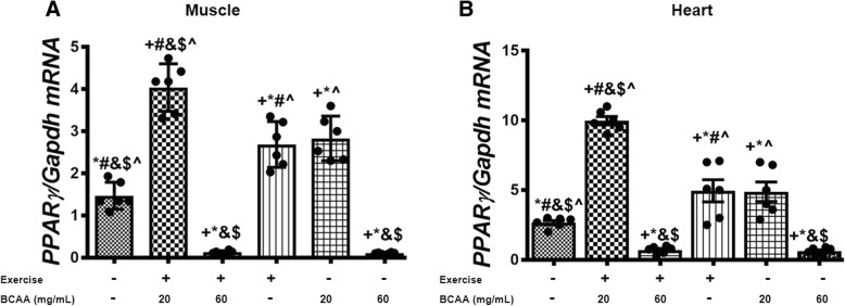 Modulation in transcript level of PPARγ in gastrocnemius muscle and heart tissues of exercised and BCAAs supplemented mice. qRT-PCR on cDNA samples of gastrocnemius muscle ( a ) and heart ( b ) tissues derived from exercised and 20 mg/mL BCAAs supplemented mice (20BCAA/Ex) indicated a significant increase in PPARγ transcript level ( p