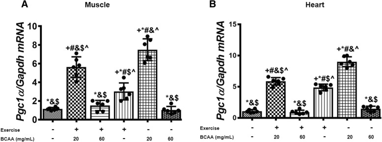 Modulation in transcript levels of Tfam in muscle and heart tissues of exercised and BCAAs supplemented mice. qRT-PCR on cDNA samples of gastrocnemius muscle ( a ) and heart ( b ) tissues derived from exercised and BCAAs supplemented mice indicated a most increase of Tfam transcript level in 20BCAA group ( p