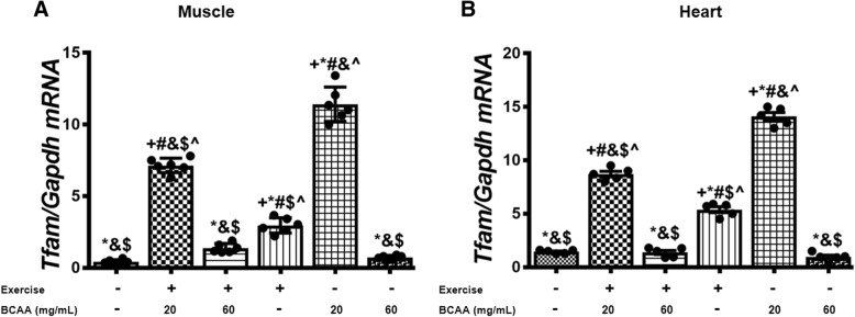 Variation in relative expression levels of Cox4i1 in muscle and heart tissues of exercised and BCAAs supplemented mice. qRT-PCR on cDNA samples of gastrocnemius muscle ( a ) and heart ( b ) tissues derived from exercised and BCAAs supplemented mice indicated a significant increase of Cox4i1 transcript level in in 20BCAA group ( p
