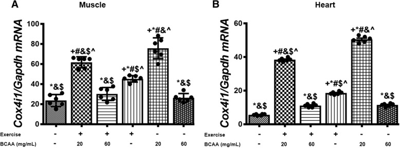 Modulation in relative expression levels of ATP5a1 in muscle and heart tissues of exercised and BCAAs supplemented mice. qRT-PCR on cDNA samples of gastrocnemius muscle ( a ) and heart ( b ) tissues derived from exercised and BCAAs supplemented mice indicated a significant increase of ATP5a1 transcript level in 20BCAA group ( p