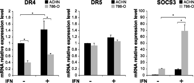 Interferon (IFN)-α-induced mRNA expression of TRAIL-R1/DR4, TRAIL-R2/DR5 and suppressor of cytokine signaling 3 (SOCS3) in RCC cells mRNA expression levels of DR4, DR5 and SOCS3 were quantified by real-time polymerase chain reaction (PCR) in ACHN and 786-O cells. The y axis shows the relative mRNA expression level with or without IFN-α treatment (1000 IU/mL) relative to that in non-treated ACHN cells. The results are expressed as the relative mean ratio ± SE of at least three independent determinations. * p