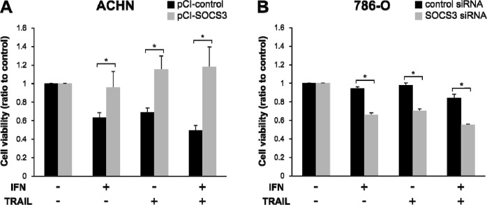 Reduced cell viability in response to TRAIL depends on SOCS3 expression Cell viability after treatment with IFN-α and/or TRAIL were compared with non-treated cells. (A) ACHN cells seeded on a culture plate were transfected with an empty vector or pCI-SOCS3 vector. (B) 786-O cells were transfected with negative control siRNA or SOCS3 siRNA. Cell viability after TRAIL treatment changed in a SOCS3-dependent manner. * p
