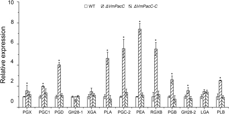 Expression levels of pectinase genes in wild-type, deletion mutant, and complemented mutant strains determined by qRT-PCR. RNA samples were isolated from lesion borders of apple tree bark at 3 days post-inoculation. Wild-type expression levels were arbitrarily set to 1. The mean was calculated using data from three independent biological replicates. The asterisk represents a statistically significant difference compared to wild-type.