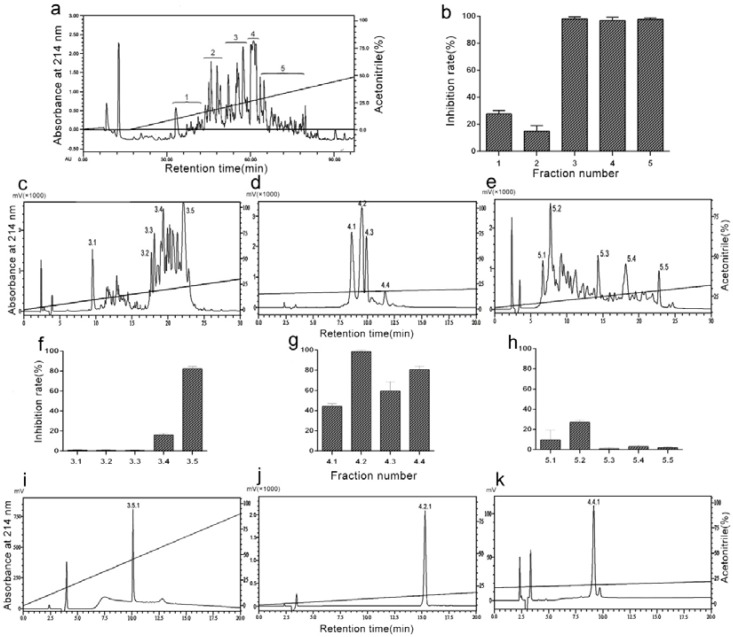 Bioassay-directed chromatographic separation of anti-platelet aggregation peptide. ( a ) The lyophilized percolate ( D. acutus venom) was separated on a semi-preparative RP-HPLC column (Hedera ODS-2; 250 × 20 mm, 5 µm) in the BioLogic Duoflow system (Bio-Rad, Redmond, WA, USA) using acetonitrile as the organic modifier and trifluoroacetic acid (TFA) as the ion-pairing reagent. ( b ) Inhibitory activities of fractions 1–5 against thrombin-induced platelet aggregation. Platelet aggregation inhibition rate (%) = [(X−Y)/X]×100, where X represents the maximum aggregation rate of saline-treated gel-filtered platelet and Y represents the maximum aggregation rate of sample-treated gel-filtered platelet. ( c – e ) The Fractions 3, 4, and 5 were separated on an analytical RP-HPLC column (Diamonsill C18; 4.6 × 250 mm, 5 µm). ( f – h ) Inhibitory activities of fractions 3.1–3.5, 4.1–4.4, and 5.1–5.5 against thrombin-induced platelet aggregation. ( i – k ) The Fractions 3.5, 4.2, and 4.4 were separated on an analytical RP-HPLC column (Diamonsill C18; 4.6 × 250 mm, 5 µm). Data are presented as means ± SD ( n = 3).