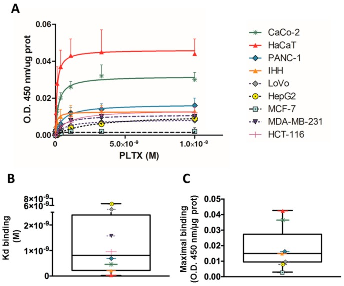 Palytoxin (PLTX) binding evaluated on a panel of different cell lines, detected by a monoclonal mouse anti-PLTX antibody targeted by horseradish peroxidase (HRP)-conjugated anti-mouse immunoglobulin G. ( A ) Saturation curves of PLTX binding. Box plots showing ( B ) distribution of Kd values and ( C ) maximal bindings obtained by the binding assay for PLTX. Results are expressed as mean ± SE of three experiments performed in triplicate.