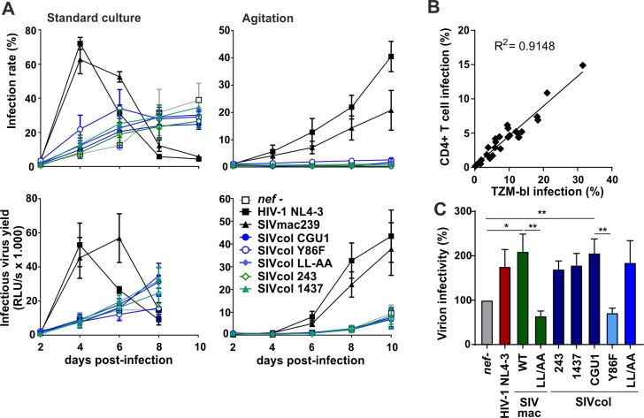 SERINC5 antagonism does not enhance viral replication in primary human CD4+ T cell cultures. (A) Stimulated primary CD4+ T cells were transduced with equal p24 amounts of VSV-G pseudotyped NL4-3 viruses carrying the indicated HIV/SIV  nef  gene or mutant thereof. Cells were maintained in culture for up to 10 days post-transduction under static conditions (left panel) or with agitation (right panel) to limit cell-to-cell viral spread. Every 2 days, samples of cell culture medium from triplicate wells were harvested to determine infectious virus yield by TZM-bl reporter cell assay and CD4+ T cell infection rates were assessed by intracellular p24 staining followed by flow cytometric analysis. Data shown represents measurements obtained from 3 donors (mean ±SEM) . (B) Correlation between the infection rates of TZM-bl and primary CD4+ T cells infected with HIV-1 IRES-eGFP  nef  recombinants produced in the presence of transiently expressed SERINC5 in HEK293T cells. (C) The infectious virus and p24 antigen yields at 4, 6 and 8 days post-infection in the standard CD4+ T cell infection experiments shown in panel A were determined by TZM-bl infection and p24 antigen ELISA, respectively. Virion infectivity normalized for p24 content is shown relative to the  nef -defective HIV-1 construct (100%). Shown are average values obtained at three time points for the three blood donors (+SEM). *p