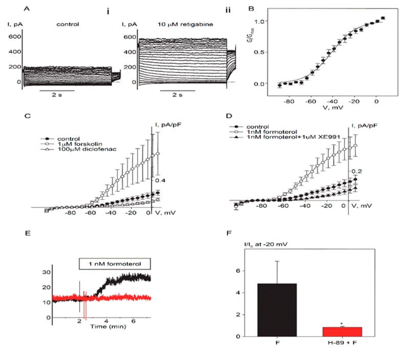 Protein kinase A (PKA)-dependent regulation of endogenous Kv7.5 currents in cultured HASMCs. ( A ) Representative current traces recorded in a single HASMC (Capacitance = 281 pF) before (i. control) and 5 min after addition of 10 µM retigabine (ii). ( B ) Mean fractional conductance plot calculated from steady-state endogenous Kv7 currents fitted to a Boltzmann distribution (V 0.5 = −40.8 mV, n = 10). ( C ) I–V relationships of Kv7 currents recorded in HASMCs before (control, filled circles, n = 5), after 5 min treatment with 1 µM forskolin (open circles, n = 4), and after 5 min treatment with diclofenac (100 µM, open triangles, n = 4). ( D ) I–V relationships of Kv7 currents recorded in HASMCs before (control, filled circles, n = 7), after 5 min treatment with 1 nM formoterol (open circles, n = 7), and after 5 min treatment with Kv7 channel blocker XE991 (1 µM) in the presence of 1 nM formoterol (closed triangles, n = 3). ( E ) Representative time-courses of 1 nM formoterol application recorded at −20 mV in a single untreated HASMC (black, Capacitance = 39 pF) and a HASMC pretreated with 10 µM H-89 (red, C = 127 pF). ( F ) Relative formoterol-induced enhancement of the current recorded at −20 mV in untreated HASMCs (black bars, n = 7) and in HASMCs pretreated with H-89 (10 µM for 20 min, red bar, n = 4). * Significant difference from control ( p
