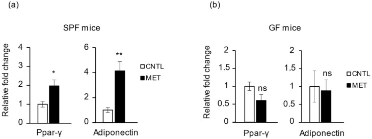 Metronidazole modulates skeletal muscle adiponectin and PPARγ expression. Real-time quantitative PCR analysis of PPARγ and adiponectin expression in gastrocnemius muscle of metronidazole-treated and nontreated ( a ) SPF ( a ) and ( b ) GF mice. N = 5 mice per group. Data presented as means ± SEM. Asterisks indicate statistically significant differences (*, p