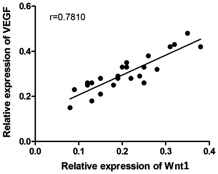 The correlation analysis between the relative protein expression level of Wnt1 and that of VEGF in the aorta of the rats. The protein expression level of Wnt1 in the aorta of the rats is positively correlated with that of VEGF (P