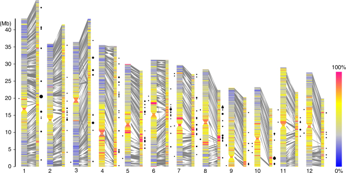 Characterization of 1597 collinear gene blocks between O. granulata and O. sativa genome. Chromosome plots of the O. sativa genome (left), comprising 1019 contigs with collinear gene blocks of O. granulata (right) that cover ~45.86 % of the assembly size. Chromosomes and contigs filled with density of repeat elements for every 100 kb window. Syntenic regions are shaded in gray boxes between them. Black circles show the percentage masked by RIRE2 in a window, and only where the proportion is more than 0.2 here
