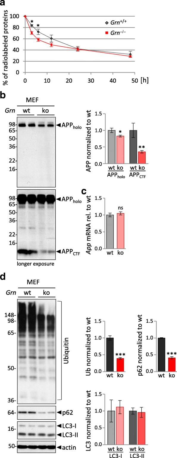 Elevated lysosomal activity results in enhanced fast protein degradation in Grn −/− MEF. a Turnover of 35 S-methionine radiolabeled proteins. MEF at 70–80% <t>confluency</t> were metabolically pulse-labeled with 35 S-methionine/cysteine for 1 h, followed by indicated chase periods. Radioactivity of 35 S- labeled proteins at chase time point 0 h was set to 100% and remaining radioactive-labeled proteins at later chase points were normalized to the initial radioactivity at time point 0 h. For statistical analysis the unpaired, two-tailed student's t-test was used to compare Grn −/− to Grn +/+ MEF ( n = 5), (*, p