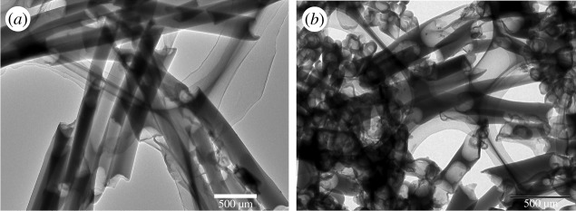 TEM images of P(PDI-DTT) nanotubes dispersed on carbon-coated copper grids. Preparation condition: ( a ) without container of chloroform in Petri dish; ( b ) with reverse side as the template.