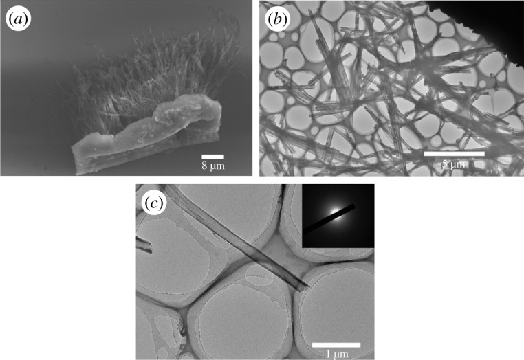 ( a ) SEM image of P(PDI-DTT) <t>nanotubes</t> in a bunch. ( b ) TEM image of P(PDI-DTT) nanotubes dispersed on carbon-coated copper grids. ( c ) TEM image of single P(PDI-DTT) nanotube.