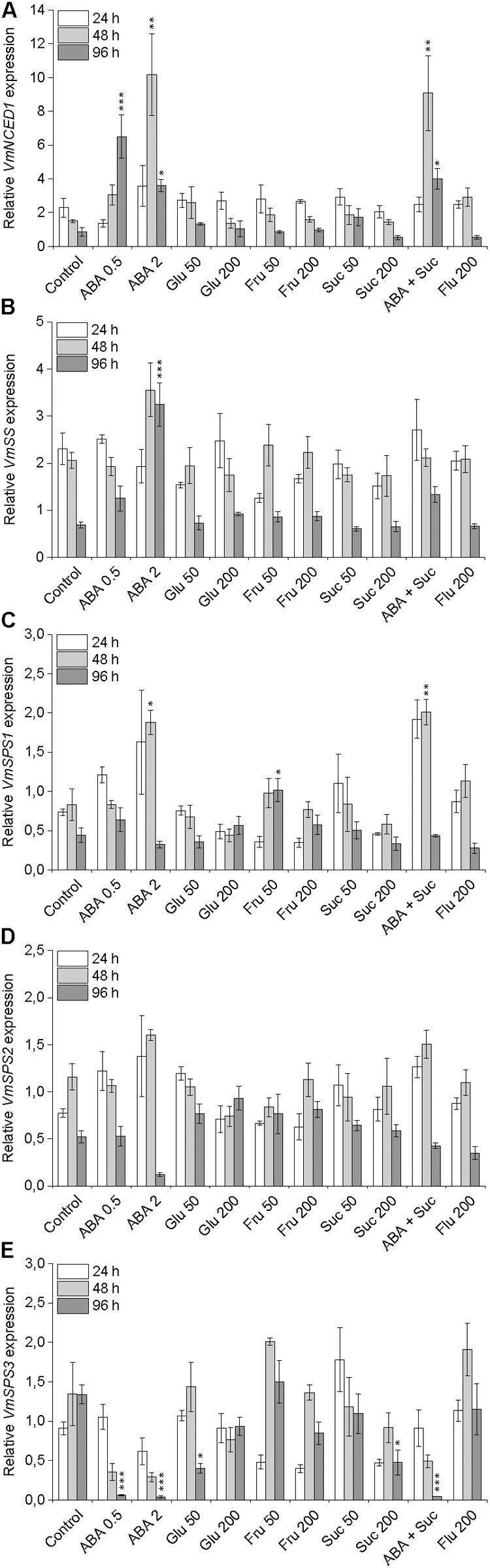 Effect of post-harvest ABA and sugar treatments on the expression of key ABA and sucrose biosynthetic genes VmNCED1 (A) , VmSS (B) , VmSPS1 (C) , VmSPS2 (D) , and VmSPS3 (E) in bilberry fruit. The treatments were: ABA (0.5 and 2 mM), glucose (50 and 200 mM), fructose (50 and 200 mM), sucrose (50 and 200 mM), 0.5 mM ABA + 200 mM sucrose, 200 μM fluridone or water (control). Relative expression of the genes was quantified by qRT-PCR and normalized to VmGAPDH . Values represent means ± SEs of three replicates. Asterisks indicate significant differences from respective control ( ∗ P ≤ 0.05, ∗∗ P ≤ 0.01, ∗∗∗ P ≤ 0.001, one-way ANOVA with Tukey's HSD test).