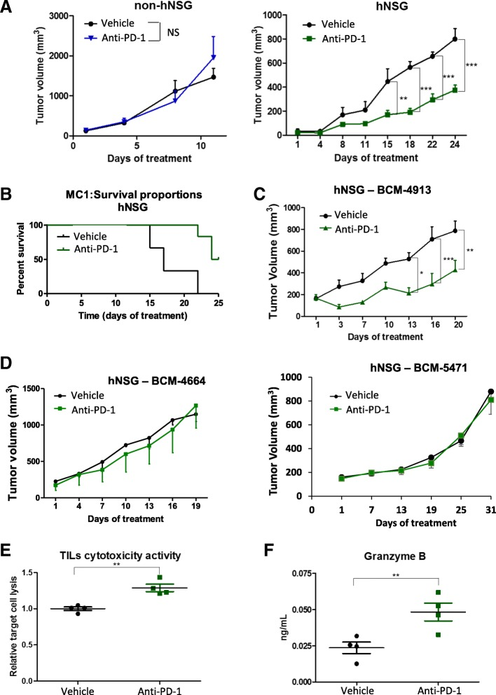 Response of triple-negative breast cancer (TNBC) patient-derived xenografts (PDXs) to the anti-programmed cell death protein 1 (anti-PD-1) therapy. a In vivo treatment with anti-PD-1 antibody (10 mg/kg intravenous [i.v.] once weekly) of either TNBC MC1 PDX-engrafted nonhumanized (left graph, n = 5) or humanized (right graph, n = 5) nonobese diabetic/severe combined immunodeficiency IL2R γ null (hNSG) mice. Tumor volume was measured twice weekly. b Kaplan-Meier analysis of median survival of mice treated with vehicle ( n = 6) vs. anti-PD-1 antibody ( n = 6). c hNSG mice engrafted with an additional TNBC BCM-4913 PDX tumor line were treated with either vehicle control or anti-PD-1 antibody (10 mg/kg i.v. once weekly). Tumor volumes were measured twice weekly. d In vivo treatment with anti-PD-1 antibody (10 mg/kg i.v. once weekly) of TNBC BCM-4664 ( n = 5) and HM-3818 ( n = 5) PDXs engrafted in hNSG mice. Tumor volume was measured twice weekly. e Analysis of tumor-infiltrating lymphocyte (TIL) cytotoxic activity. TILs isolated by Ficoll gradient from vehicle- or anti-PD-1 antibody-treated MC1 PDX tumors engrafted in hNSG mice were cocultured with disaggregated MC1 tumor cells obtained from the corresponding PDX grown in nonhumanized NSG mice. Cytotoxic activity was measured using the CytoTox 96® Non-Radioactive Cytotoxicity Assay as per the manufacturer's instructions. f Levels of <t>granzyme</t> B tumor were measured by incubating tumor protein lysates with antibody-immobilized magnetic beads and evaluated using a Luminex LX200 Multiplexing Assay System. ** P