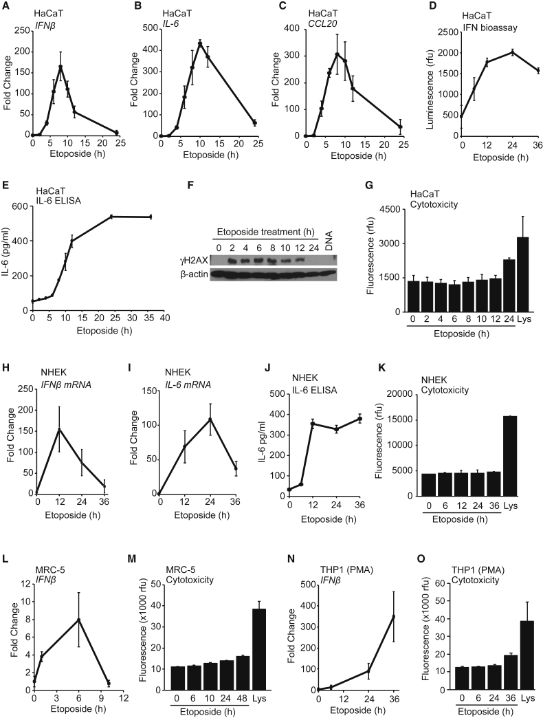 Etoposide-Mediated DNA Damage Induces an Acute Innate Immune Response in Human Cells (A–C) HaCaT keratinocytes were treated with 50 μM etoposide for the times indicated before qRT-PCR analysis of IFN-β (A), IL-6 (B), and CCL20 (C) mRNA. (D and E) Supernatants from cells treated with 50 μM etoposide were analyzed for secreted type I IFN using a bio-assay (D) or IL-6 protein using ELISA (E). (F) HaCaT cells were treated with 50 μM etoposide for the times indicated or transfected with 1 μg/mL herring testis (HT)-DNA for 6 hr. Phosphorylation of γH2A.X was analyzed by immunoblotting. (G) Cytotoxicity assay of HaCaT cells treated with 50 μM etoposide for the times indicated or lysed (Lys). (H and I) Primary normal human epidermal keratinocytes (NHEKs) from adult donors were treated with 50 μM etoposide for the times indicated before qRT-PCR analysis of IFN-β (H) and IL-6 (I) mRNA. (J) Supernatants from NHEK cells treated as in (H) were analyzed for IL-6 secretion by ELISA. (K) Cytotoxicity assay of NHEK cells treated as in (H) or lysed (Lys). (L) Primary MRC-5 fibroblasts were treated with 50 μM etoposide before qRT-PCR analysis of IFN-β mRNA expression. (M) Cytotoxicity assay of MRC-5 cells treated with 50 μM etoposide or lysed (Lys). (N) PMA-differentiated THP1 cells were stimulated with 50 μM etoposide for indicated times before qRT-PCR analysis of IFN-β mRNA. (O) Cytotoxicity assay of THP1 cells treated as in (N) or lysed (Lys). Data are presented as mean values of biological triplicates ± SD. See also Figure S1 .