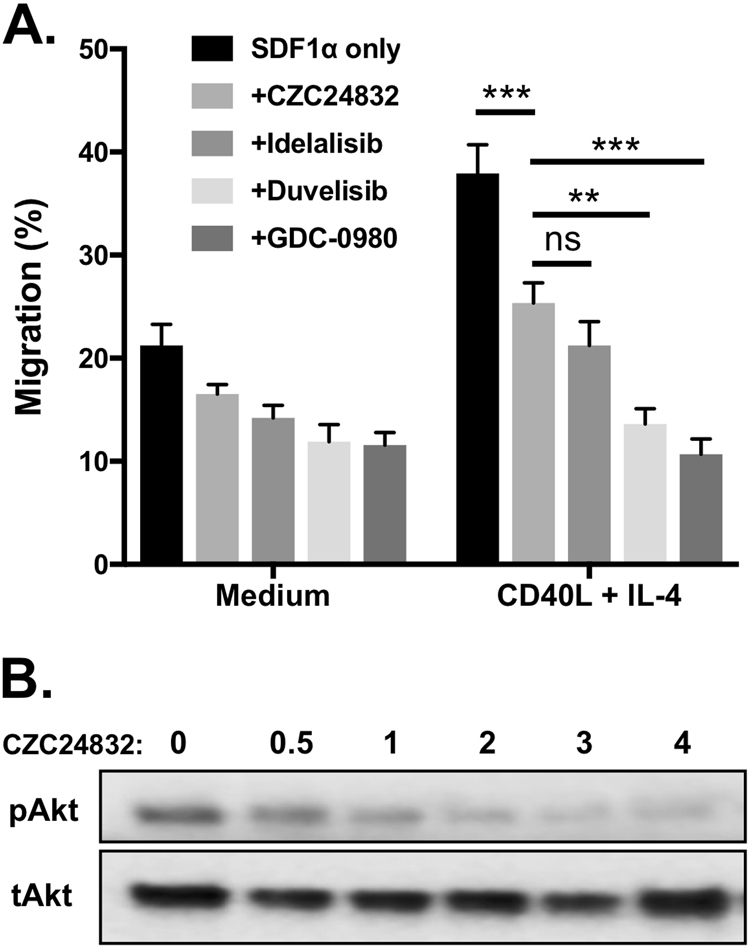 Inhibition of PI3Kγ impairs Akt phosphorylation and B cell migration in a transwell assay. a Inhibition of PI3Kγ or PI3Kδ significantly decreased the migration of JVM3 cells. JVM3 cells were cultured in medium or stimulated for 24 h with <t>CD40L/IL-4</t> and then incubated with the PI3Kγ-specific inhibitor CZC24832 (2 µM), the PI3Kδ - specific inhibitor idelalisib (1 µM), dual PI3Kδ/γ inhibitor duvelisib (1 µM), or the pan-PI3K inhibitor GDC0980 (1 µM) and subjected to a transwell migration assay. DMSO served as the vehicle control for the inhibitors, while SDF1α (100 ng/ml) served as the chemoattractant ( n = 7). b Effect of PI3Kγ inhibitor on Akt phosphorylation. JVM3 cells were pre-incubated with the indicated concentrations of CZC4832 (in μM) and then stimulated with SDF1α for 10 min. Akt Ser473 phosphorylation and total Akt levels were assessed by Western blot