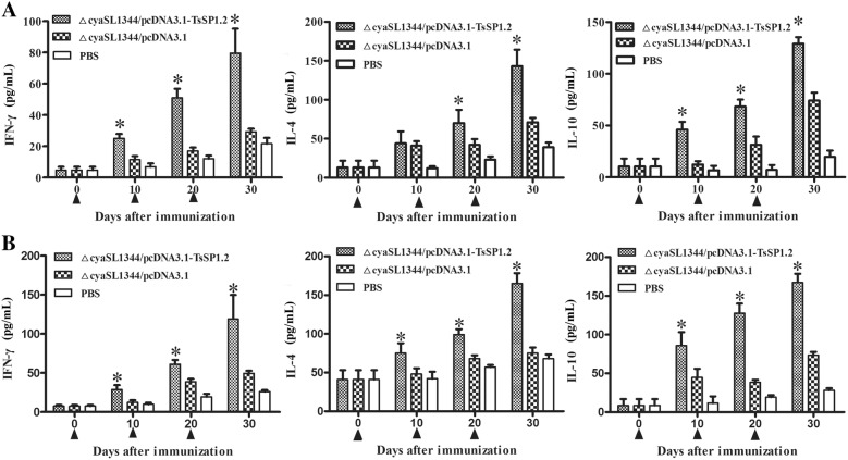 IFN-γ, IL-4 and IL-10 levels determined in supernatants of splenocytes (A) and MLN cells (B) of mice orally vaccinated with ΔcyaSL1344/pcDNA3.1-TsSP1.2. After the cells were stimulated with rTsSP1.2 for 72 h, cytokine concentration in supernatants was determined by ELISA. The data are the mean ± SD of cytokine concentration ( n = 5). Asterisk (*) indicates statistical differences ( P