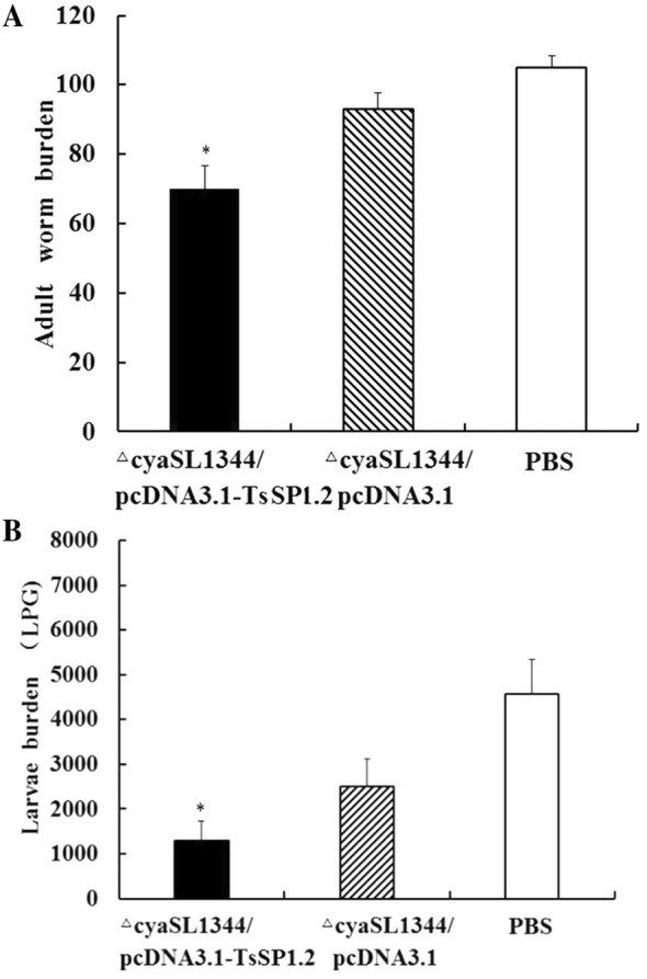 Immune protection of mice vaccinated with ∆cyaSL1344/pcDNA3.1-TsSP1.2 after being challenged with 300 T. spiralis larvae. A Intestinal adult worm number. B Larvae per gram (LPG) of muscles. Data are shown as the mean ± SD of 10 mice/group. A statistically distinct reduction was observed in the parasite burdens of intestinal adults and muscle larvae in immunized mice compared to plasmid alone or PBS group (* P