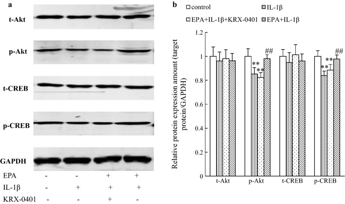 The effect of EPA on Akt and CREB phosphorylation was blocked by inhibition of the Akt signal, in the presence of IL-1β in cultured rat hippocampal neurons. a Cells pretreated with KRX-0401 and then treated with EPA and IL-1β, and the proteins expression was measured by western blotting. b Relative levels of proteins were determined by densitometry of the immunoblots. Data were normalized by taking the value of the control group as 1. ** P