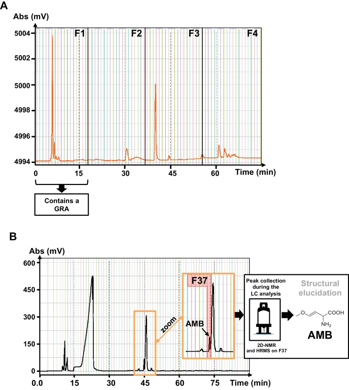 Isolation of the GRA released by P.aeruginosa. ( A ) Semi-prep HPLC-UV (scan 210–600 nm) chromatogram of the fractionation of the active PAO1 extract. Fraction F1 presented strong inhibitory seed germination activity. ( B ) Semi-prep HPLC-ELSD chromatogram of the isolation of the active principle from the AMBox extract localized in fraction 37 ( F37 ). The structure of the AMB was determined by nuclear magnetic resonance (NMR) and high-resolution mass spectrometry HRMS.