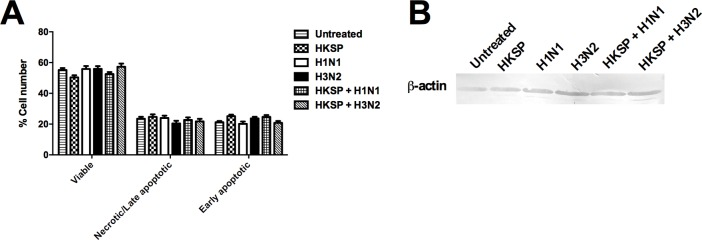 Modulation by IAV of innate and adaptive responses to Pneumococcus is not due to cell death or host protein synthesis shutdown. (A) CD14 + cells treated for 24 h with HKSP, live H1N1 or H3N2 alone or in combination with HKSP (or untreated as a control) were dual stained with FITC annexin V and propidium iodide. The percentages of viable, necrotic/late apoptotic, and early apoptotic cells after treatments were ascertained using flow cytometry. Each column represents mean % cell number + SEM of 3 independent donors. (B) Lysates from CD14 + cells treated for 24 h as outlined in (A) above, were prepared and analysed by Western blot for β-actin levels. Western blot is a representative of 2 independent repeats with different donors.