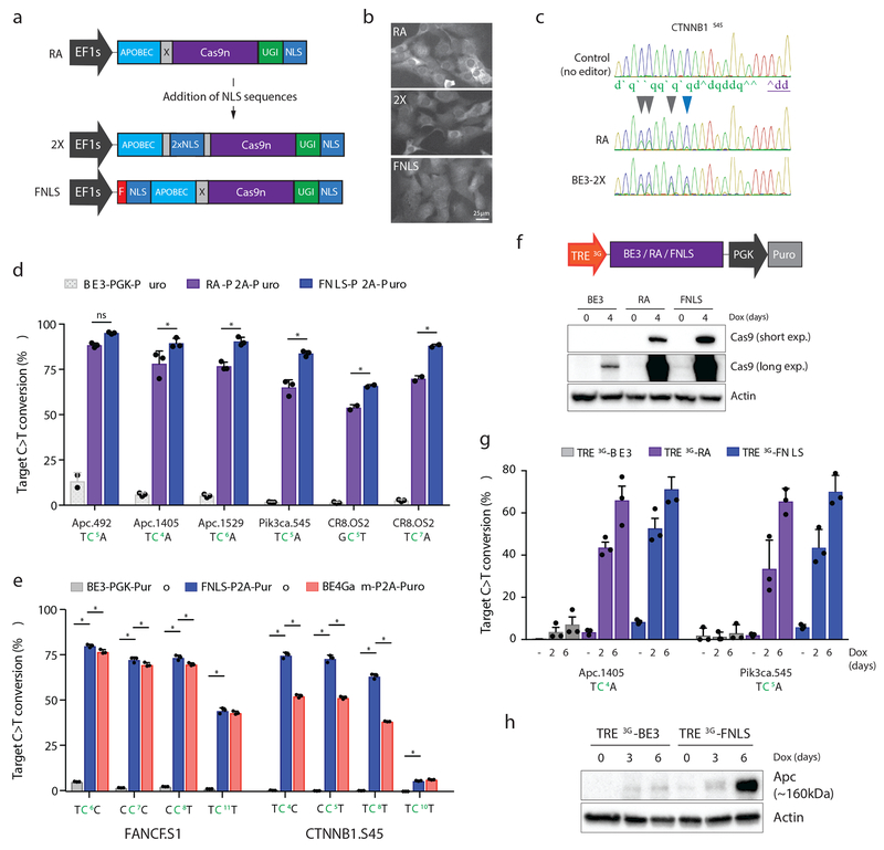 N-terminal NLS sequences increase the range and potency of target base editing. a. Schematic representation of RA enzyme (above) and two new variants carrying NLS sequences within the XTEN linker (2X) or at the N-terminus (FNLS) b. Immunofluorescent staining of Cas9 in NIH/3T3 cells expressing RA, 2X, or FNLS. Experiment was repeated twice with similar results. c. Sanger sequencing chromatogram showing increased editing of the cytosine at position 10 (blue arrow) within the protospacer of a CTNNB1.S45 sgRNA. d . Frequency (%) of C > T conversion in NIH/3T3 cells transduced with RA - or FNLS-P2A-Puro <t>lentiviral</t> vectors 6 days following introduction of different sgRNAs, as indicated. Editing in BE3-PGK-Puro cells (from Figure 1e ) is shown for comparison. e . Frequency (%) of C > T conversion in PC9 cells transduced with BE3-PGK-Puro , FNLS or BE4Gam RA -P2A-Puro lentiviral vectors 6 days following introduction of different sgRNAs, as indicated. For d and e , graphs show mean values. Error bars represent s.e.m., n = 3 biologically independent samples; asterisks (*) indicate a significant difference (p