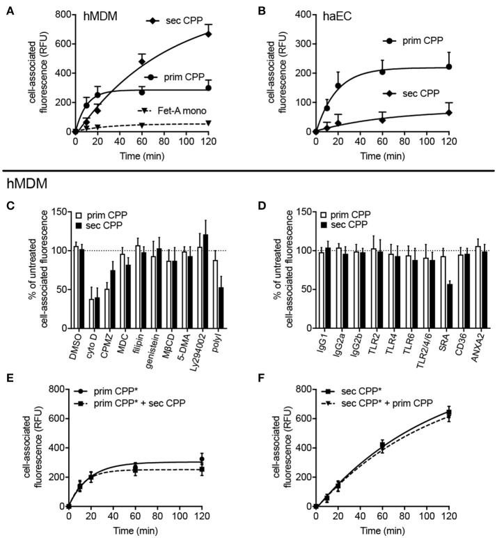 Differential endocytosis of primary and secondary CPP in human monocyte-derived macrophages and aortic endothelial cells. Human monocyte-derived macrophages (hMDM) or human aortic endothelial cells (haEC) were treated with Alexa488-labeled primary or secondary CPP, both 100 μg/mL calcium content, synthesized from FCS/DMEM supplemented with phosphate (final conc. 3.5 mM). Monomeric labeled-fetuin-A was included as a comparator (1 mg/ml). Cell-associated fluorescence was measured by flow cytometry in fixed cells at the stated timepoints.  (A)  Endocyosis observed in hMDM and  (B)  haEC, respectively.  (C,D)  hMDM were pre-treated for 30–60 min with one of several inhibitors (vs. vehicle) or receptor blocking antibodies (vs. isotype control).  (C)  Pre-treatment with cytochalasin  (D) , an inhibitor of actin polymerization, markedly attenuated uptake of both primary and secondary CPP and (