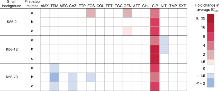 Collateral effects in gyrA mutants with decreased susceptibility to ciprofloxacin. Relative changes in antimicrobial susceptibilities, CS (blue) and CR (red), were determined by comparing average IC 90 values of nine first-step mutants to their respective wild-type strain. Antimicrobials are ordered by antimicrobial class, as in Supplementary Fig. 2