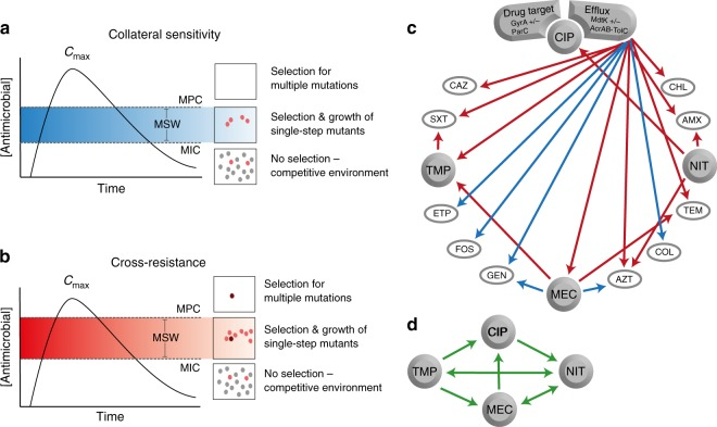 Presentations of the potential effects and implications of CS and CR. a Sequential drug administration informed by CS (blue) could potentially narrow or shift the mutant selection window (MSW) downwards in concentration space whereas ( b ) CR (red) results in a widened or shifted upwards mutant selection window for secondary antimicrobials. This would affect the probability of acquiring second-step mutations leading to high-level resistance. Consequently, CS-informed secondary therapies could reduce selection and thus propagation of first-step mutants resulting in a reduced opportunity for second-step mutations to occur. Dots represent bacteria resistant to a primary antibiotic (gray), spontaneous mutants with reduced susceptibility to a secondary drug (pink), or those with high-level resistance to the secondary drug (dark red). Note that these are hypothetical schematics and in many cases the maximum concentration achieved ( C max ) may be below the MPC. c Arrows indicate conserved collateral responses, where CS (blue) and CR (red) are depicted. The collateral responses in this study are mainly predicted by efflux-related mutations in the ciprofloxacin-resistant mutants. These data suggest potential secondary treatment options that may reduce the rate of resistance evolution ( a , b ) following initial treatment failure. d Green arrows indicate putative temporal administration of four antimicrobials used for the treatment of urinary-tract infections, as informed by the collateral networks in ( c )