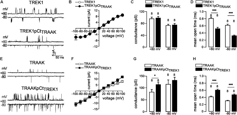 pCt modulates TREK1 and TRAAK single-channel properties. (A,E) Single-channel recordings at +80 and –80 mV, from HEK cells expressing wild-type and mutated channels. Pipette and bath solutions contained 150 mM KCl. (B,F) Single channel current–voltage relationships obtained from one level opening current in symmetrical 150 mM KCl. (C,G) Unitary conductances at +80 and –80 mV. (D,H) Mean open time obtained from channel opening recorded at +80 mV and –80 mV. (C,D,H,G) , Data are presented as mean ± SEM, the number of patches is indicated, ∗ p